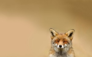Happy-fox-animals-green-fox-1680x1050