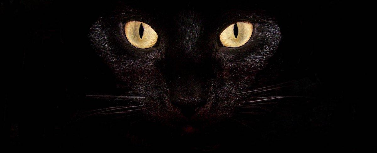 black-wallpaper-desktop-cat-background
